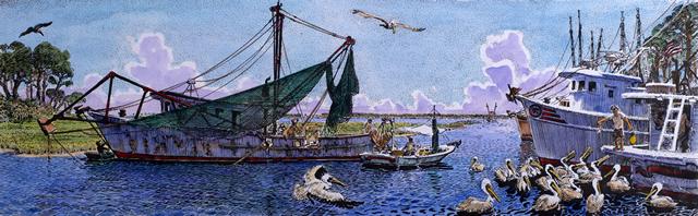 Feeding Pelicans C